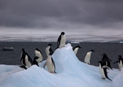 Sounds of Antarctica